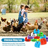 72 Pieces 16 mm Chicken Leg Rings Multiple Colour