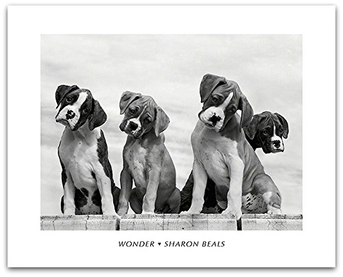 Sharon Beals Wonder Puppies Tilting Heads Animal Photography Decorative Poster Print 16 By 20