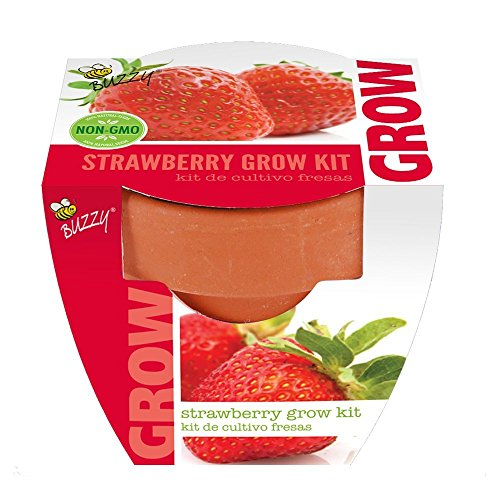 Strawberry Mini Grow Pot Kit Plant Seeds Plant Outdoor & Indoor (Seeds Strawberry Grow)
