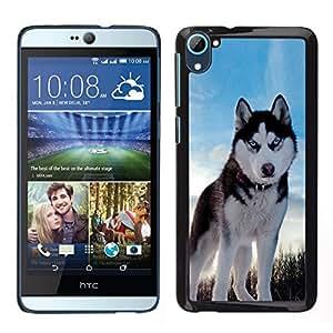 // PHONE CASE GIFT // Duro Estuche protector PC Cáscara Plástico Carcasa Funda Hard Protective Case for HTC Desire D826 / Husky Bright Blue Eyes Winter Dog /