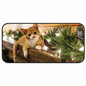 iPhone 5 5S Black Hardshell Case kitten lying grass Desin Images Protector Back Cover