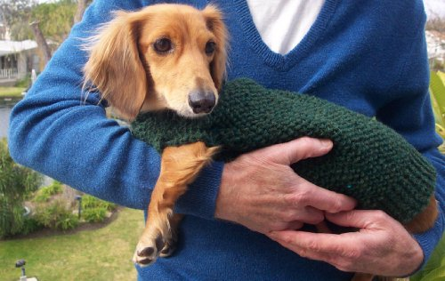 Knitting Pattern For Lenas Miniature Dachshund Dog Sweater Kindle