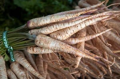 Root Parsley 'Cukrowa' (Petroselinum Crispum) Vegetable Plant Seeds, Early Heirloom