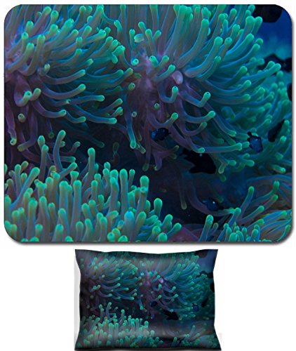 Luxlady Mouse Wrist Rest and Small Mousepad Set, 2pc Wrist Support design IMAGE: 34145275 Beautiful anemone on a tropical coral reef