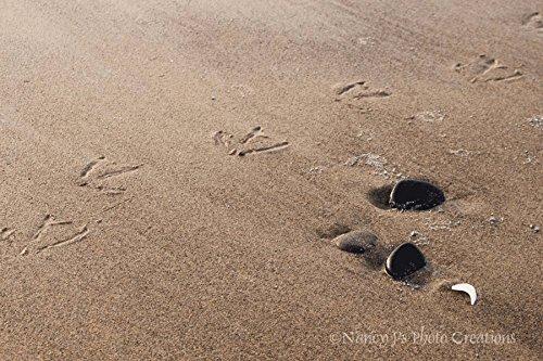 seagull-footprints-sandy-beach-unframed-photographic-print-summer-seashore-decor-tan-brown-black-sto