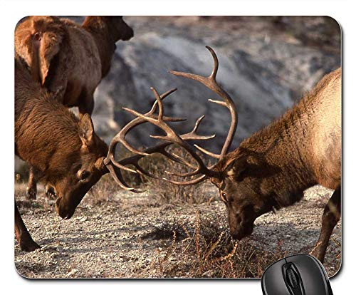 Mouse Pad - Bull Elk Sparring Wildlife Nature Outdoors