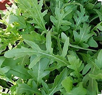 vegherb 1500 Seeds Arugula -Sin-GMO: Amazon.es: Jardín