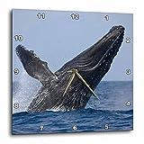 3dRose dpp_89830_2 Hawaii, Big Island, Humpback Whale Breaching-Us12 Pso0004-Paul Souders-Wall Clock, 13 by 13-Inch