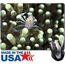 """MSD Natural Rubber Mouse Pad/Mat with Stitched Edges 9.8"""" x 7.9"""" IMAGE ID: 10744068 A close up on a pinhead crab inbetween anemone tentacles Kwazulu Natal South Africa"""