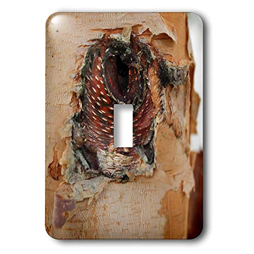 (3dRose Stamp City - nature - Close up photo of the bark of a river birch resembling an angry bird. - Light Switch Covers - single toggle switch (lsp_301356_1))