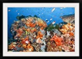 GreatBIGCanvas ''Healthy reef structure, Komodo National Park, Indonesia.'' Photographic Print with Black Frame, 36'' x 24''