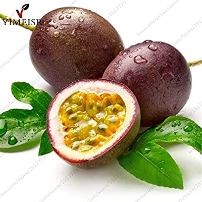 WANCHEN Purple Passion Fruit(Passiflora edulis) Seeds, Rare Tropical Edible Fruit Seeds Organic Fruit Tree Seeds for Indoor plant10pcs/bag : Garden & Outdoor