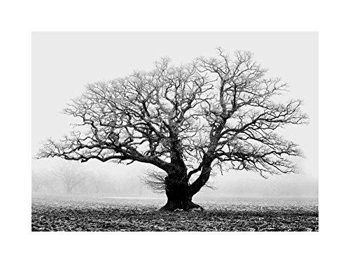Old Black White Photos - 4