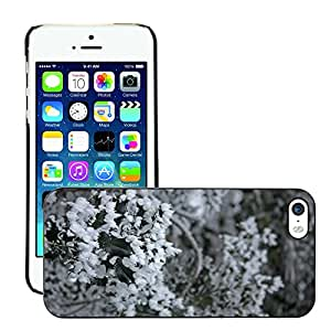 Print Motif Coque de protection Case Cover // M00153774 Invierno Maduro Eiskristalle hielo // Apple iPhone 5 5S 5G