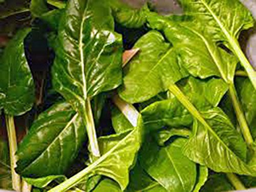Swiss Chard, Perpetual Spinach Heirloom, Organic 500 seeds, Non Gmo