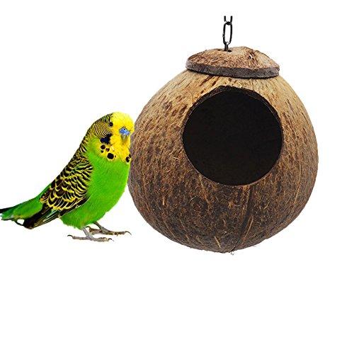 Parakeet Nest - 4
