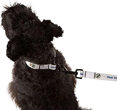 Real Madrid mascota plomo pequeño ancho 15 mm perro ajustable ...