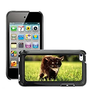 Hot Style Cell Phone PC Hard Case Cover // M00041663 animals kitty fluffy cute black // Apple ipod Touch 4 4G 4th