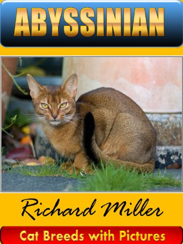 ABYSSINIAN Cat (Cat Breeds with Pictures Quicklet)