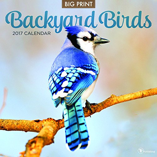 2017 Backyard Birds Wall Calendar -