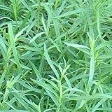Outsidepride Tarragon - 5000 Seeds