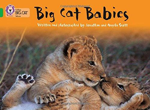 Big Cat Babies (Collins Big Cat)