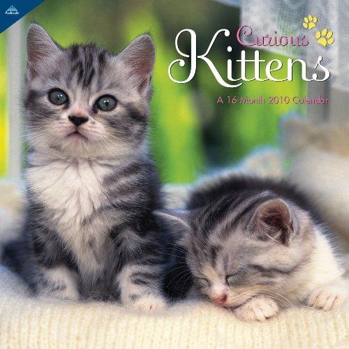 Curious Kittens 2010 Wall Calendar ()