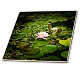 3dRose Alexis Photography - Flowers - Beautiful pink water lily flower in an artificial pond - 6 Inch Glass Tile (ct_273726_6)