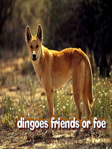 Amazoncom Dingoes Friend Or Foe Dingoes-2139