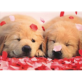 Yorkie with rose in mouth yorkshire terrier - Valentines day pictures with puppies ...
