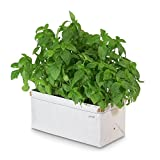 Patch Planter - Easy, Compact Self Watering Herb & Greens Planter - Single Planter