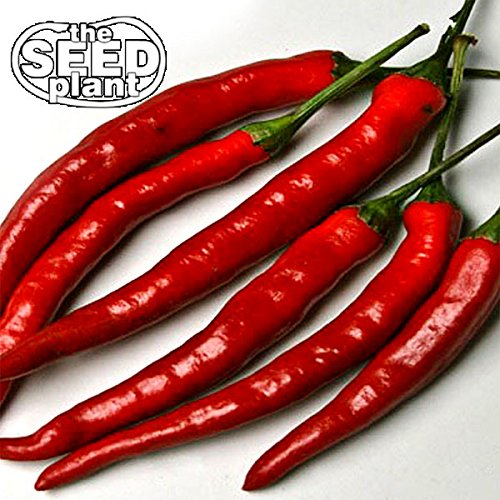Cayenne Long Slim Pepper Seeds - 100 Seeds Non-GMO