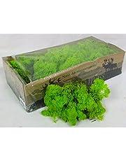 Moss - Noorse rendier - natuurlijk geconserveerd gedroogd - 20 kleuren - Kies gewicht 100 grams Spring Green - Moss