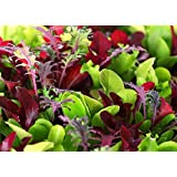 This is a MIX!!! 2000+ ORGANICALLY GROWN Microgreens Mix 40 Varieties Superfood Seeds Heirloom NON-GMO Delicious and Healthy, Easy to Grow! From USA
