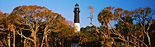 Posterazzi PPI151328L Trees Around Lighthouse State Park Hunting Island Beaufort South Carolina USA Poster Print, 36 x 12, -
