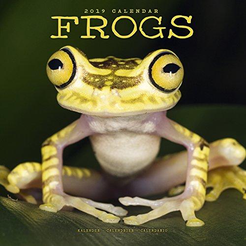 Frog Calendar - Cute Animal Calendar - Calendars 2018 - 2019 Wall Calendars - Animal Calendar - Frogs 16 Month Wall Calendar by - Frog Calendar