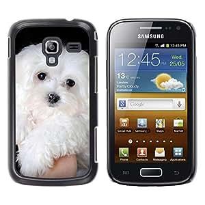 TopCaseStore / la caja del caucho duro de la cubierta de protección de la piel - Maltese Dog White Small Longhair - Samsung Galaxy Ace 2 I8160 Ace II X S7560M
