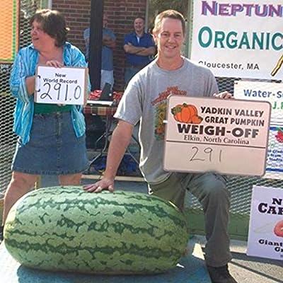 Nabsna New Healthy Vegetable Fruit Seeds Green Blooms Giant Watermelon Seeds Flowers : Garden & Outdoor