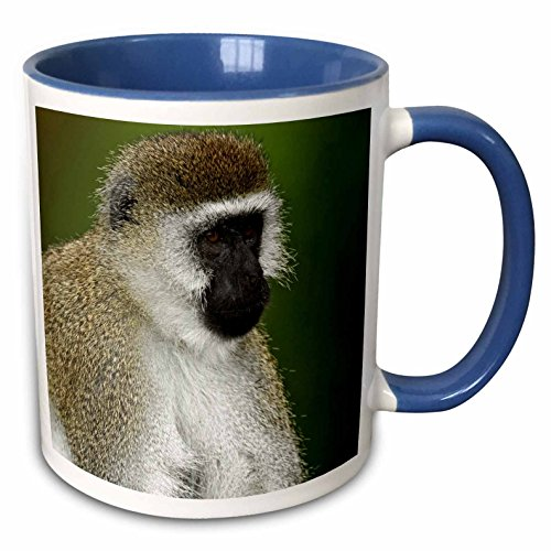 Black Faced Vervet Monkey - 3dRose Danita Delimont - Monkeys - Black-faced Vervet Monkey, Lake Nakuru, Kenya - AF21 AJE0858 - Adam Jones - 15oz Two-Tone Blue Mug (mug_131834_11)