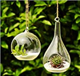 Mkono 2 Pack Hanging Plant Terrarium Glass Planter, Globe and Teardrop
