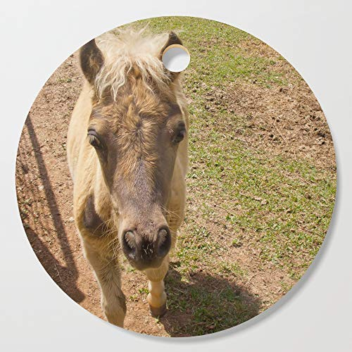 Society6 Wooden Cutting Board, Round, Curious miniature horse foal by hereswendy ()