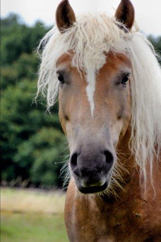 The Haflinger Horse Journal: 150 page lined (Haflinger Horse Horses)