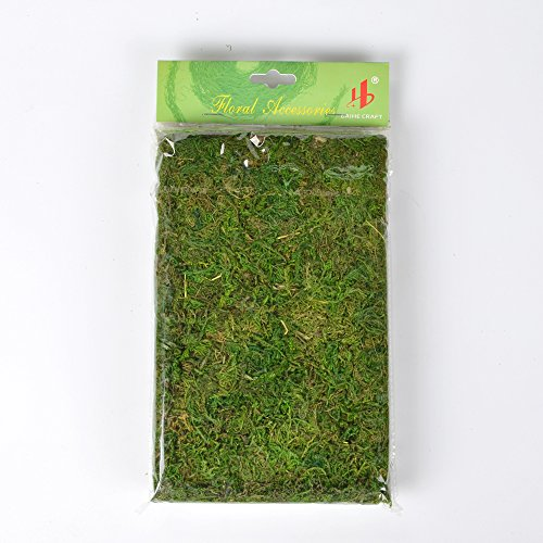 Cheap Byher Preserved Sheet Moss for Home Garden Bonsai Decor, Fresh Green, 50g for sale