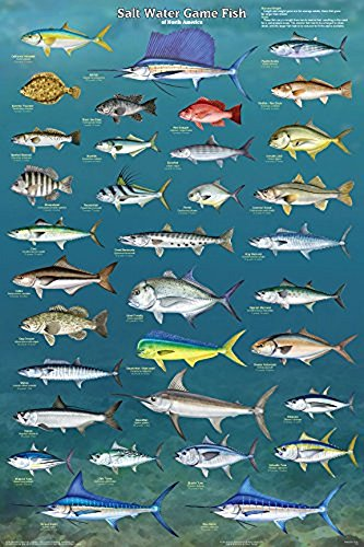 Picture Peddler Salt Water Game Fish of North America Laminated Educational Reference Chart Print Poster 24x36