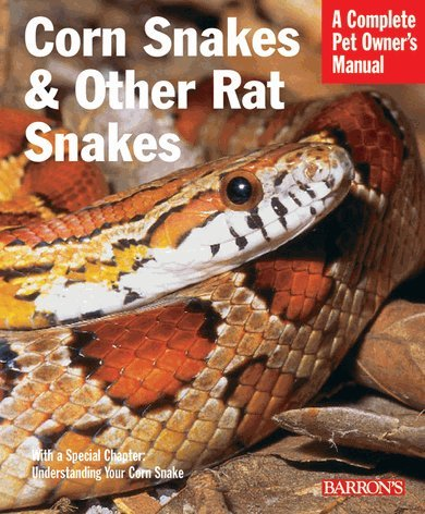 Corn Snakes & Other Rat Snakes