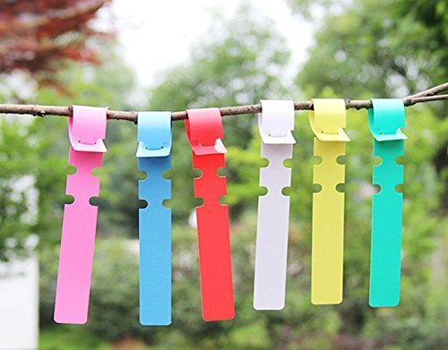 COOLTOP Plant Labels 600 pcs 6 Colos Plastic Plant Hanging Tree Tags Wrap Around Nursery Garden Lables Tags Large Writing Surface by COOLTOP