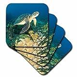 3dRose Green Sea Turtle, Makena SP, Maui, Hawaii - US12 SWS0150 - Stuart Westmorland - Soft Coasters, set of 4 (cst_89949_1)