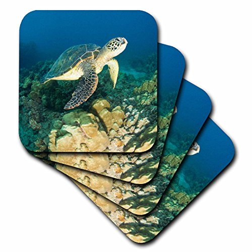 3dRose Green Sea Turtle, Makena SP, Maui, Hawaii - US12 SWS0150 - Stuart Westmorland - Soft Coasters, set of 4 (cst_89949_1) by 3dRose