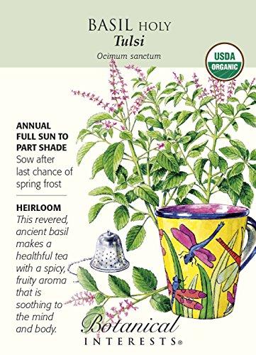 Organic Tulsi Holy Basil Seeds
