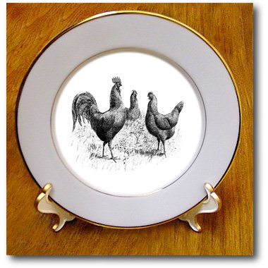 3dRose cp_100976_1 Black N White Vintage Drawing of Chickens N Rooster-Porcelain Plate, 8-Inch